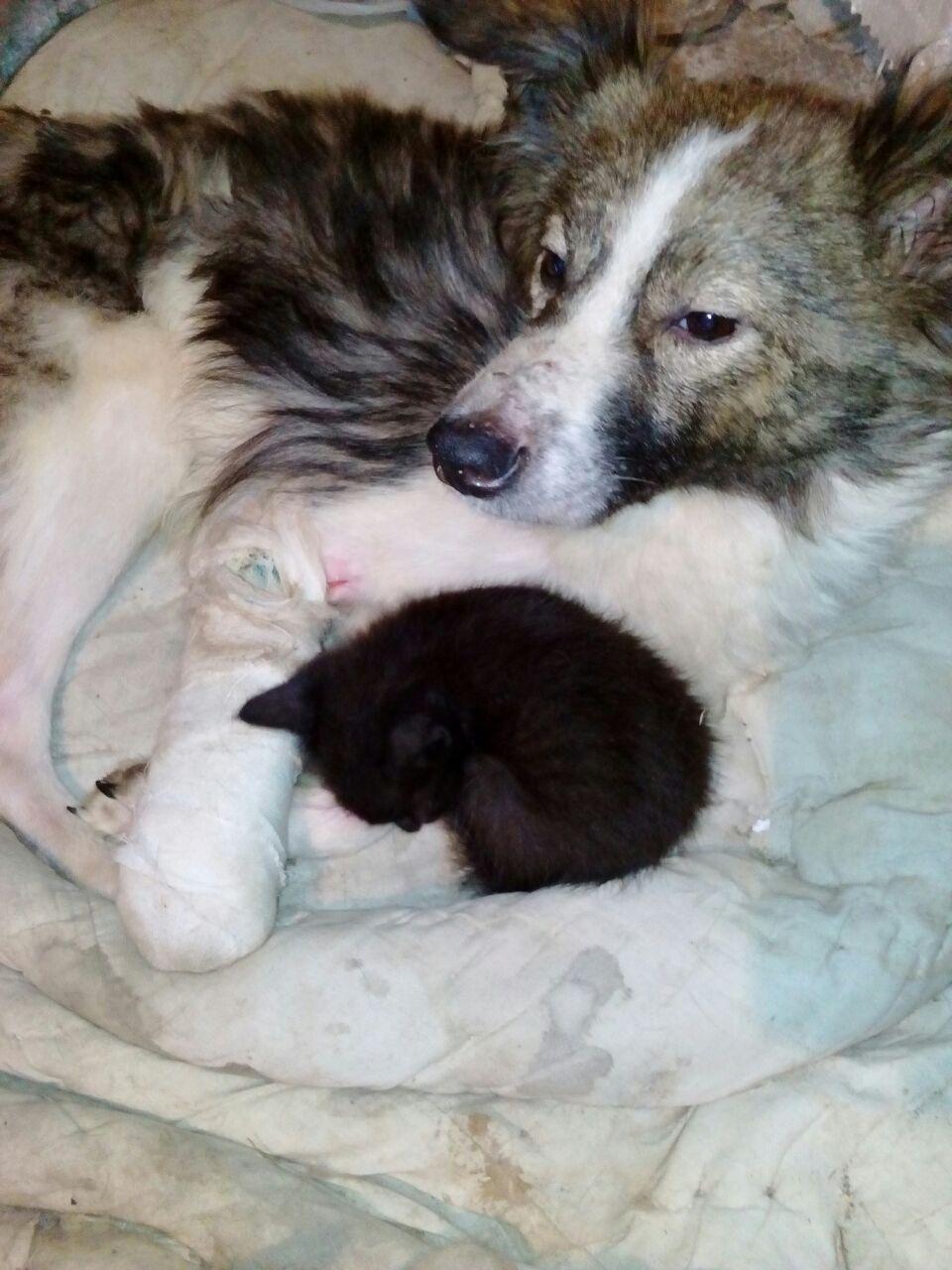 Gold – Schicksal eines Mischlings in Wladikawkas, stellvertretend für viele andere Hunde