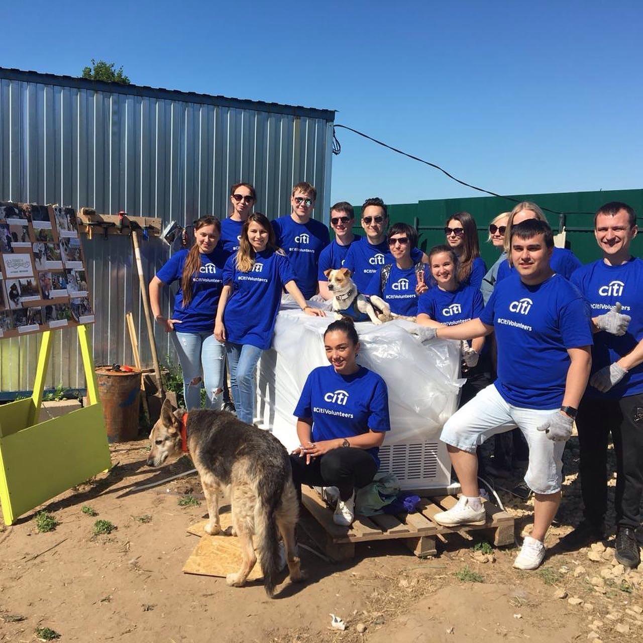 Tierheim Kazan: Lokale Hilfe