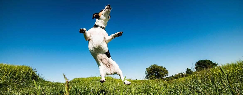 Wie viel Bewegung braucht ein Hund?