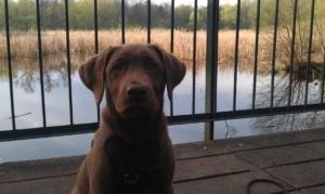 Hundepark Fauler See