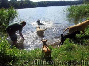 Hunde baden gerne