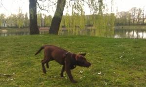 Hundepark Orankesee