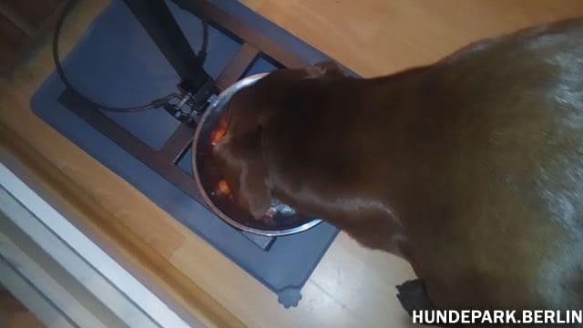 Hund findet das Rohfutter Barf Fleischmix sehr lecker
