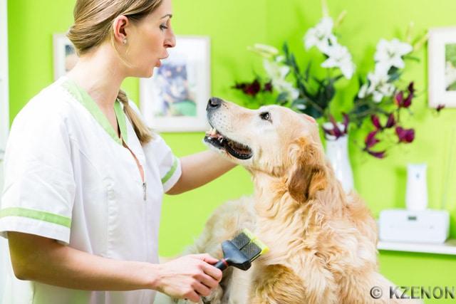 Fellpflege Hund