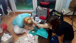 Tierarzt Notoperation