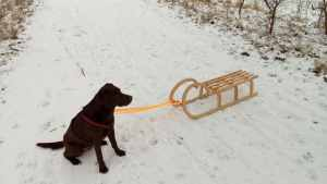 Versicherung für Hunde