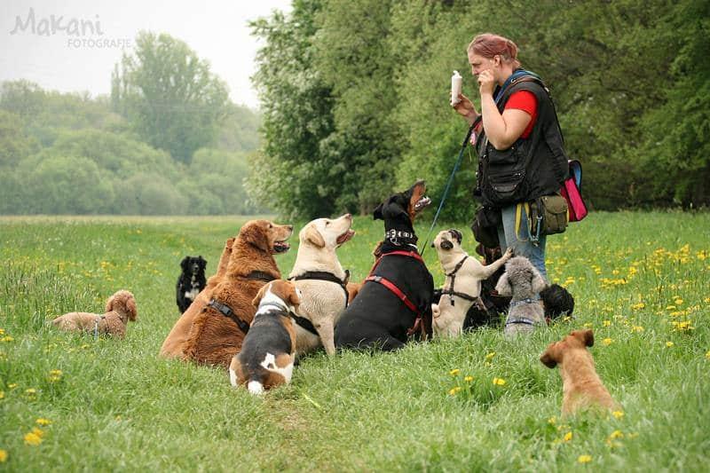 Dogwalker-Ausbildung-Hundesitter-werden-Ausbildung-Weiterbildung-Hundepension-eröffnen-selbstständig machen-Selbstständigkeit