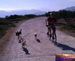 Fahrrad-Tour mit Hunden.