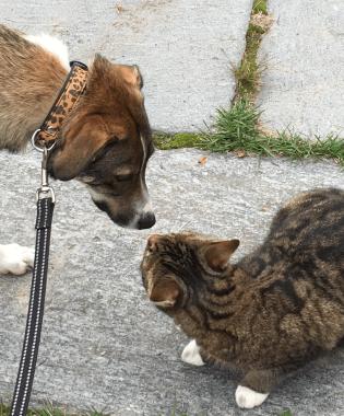 Jolie möte katt