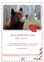 Alla Hjärtans Dag Hund