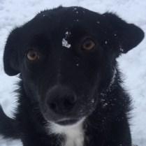 Tina - tik - 2015 - 3900 kr - Växjö