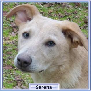 Serena -tik - 2019 - 5800kr