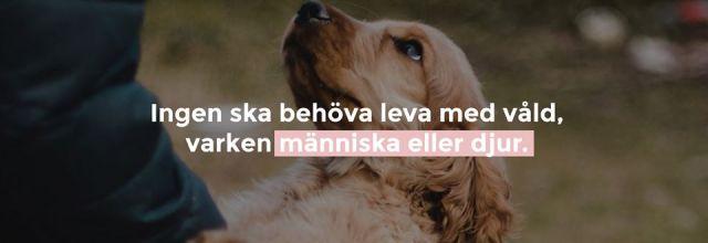 Bild från Voov