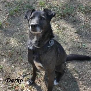 darko-namn