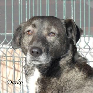 darko9
