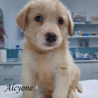 alcyone-valp