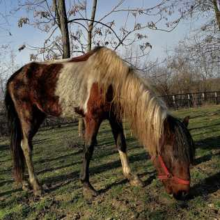 hästar16 (2)