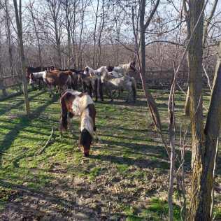 hästar16 (4)