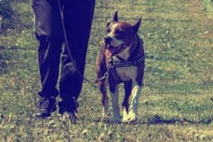 Hundutbildning
