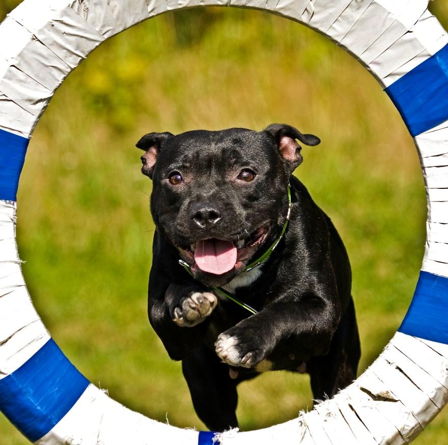 hundkurs hundutbildning agilitykurs