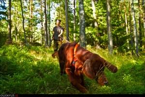 Viltspår  eftersök spårkurs hundkurs hundutbildning