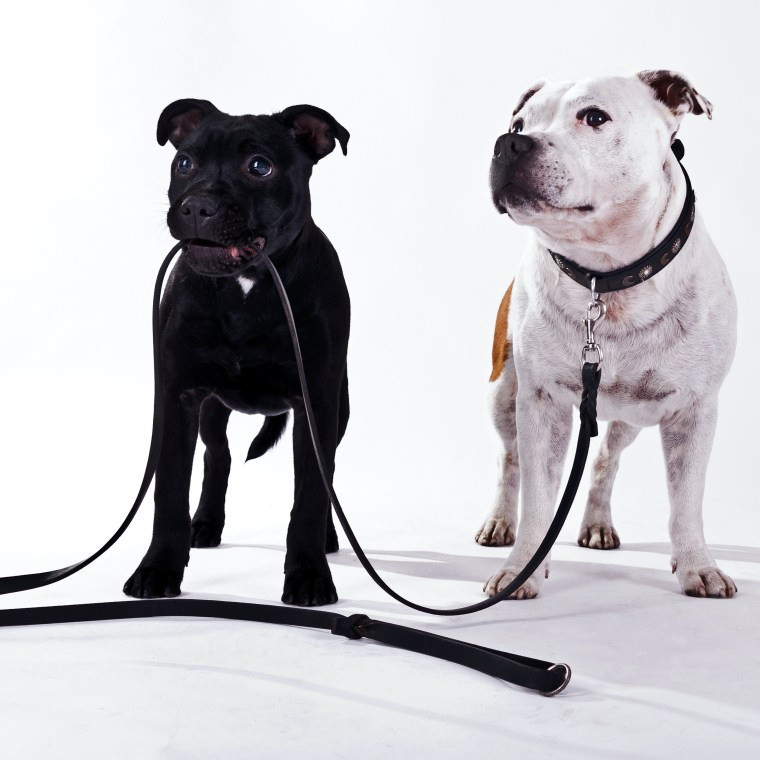 hundkurs hundutbildning koppelkurs