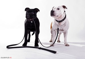 hundutbildning koppelkurs hundkurs