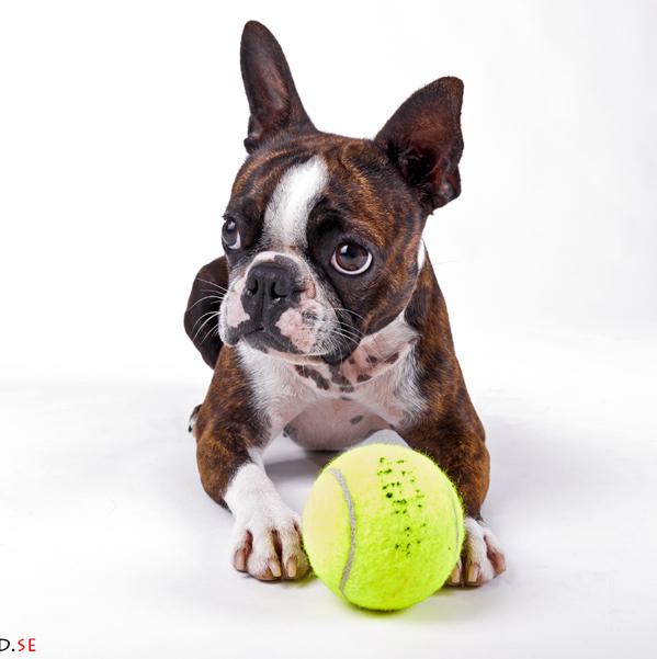 hundutbildning beteendeutredning