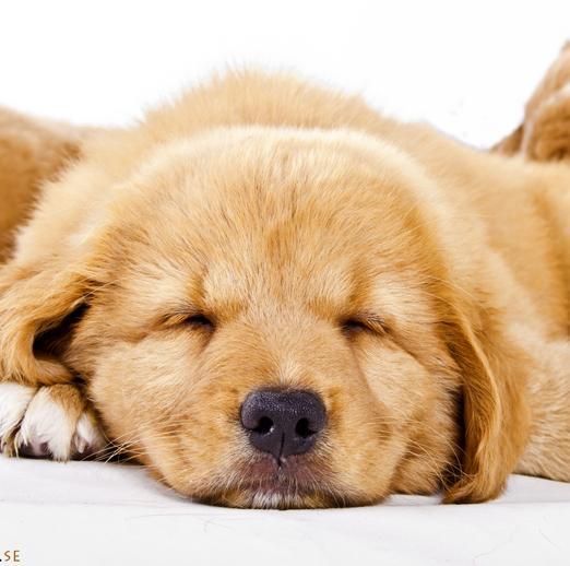 hundkurs hundutbildning avslappningskurs