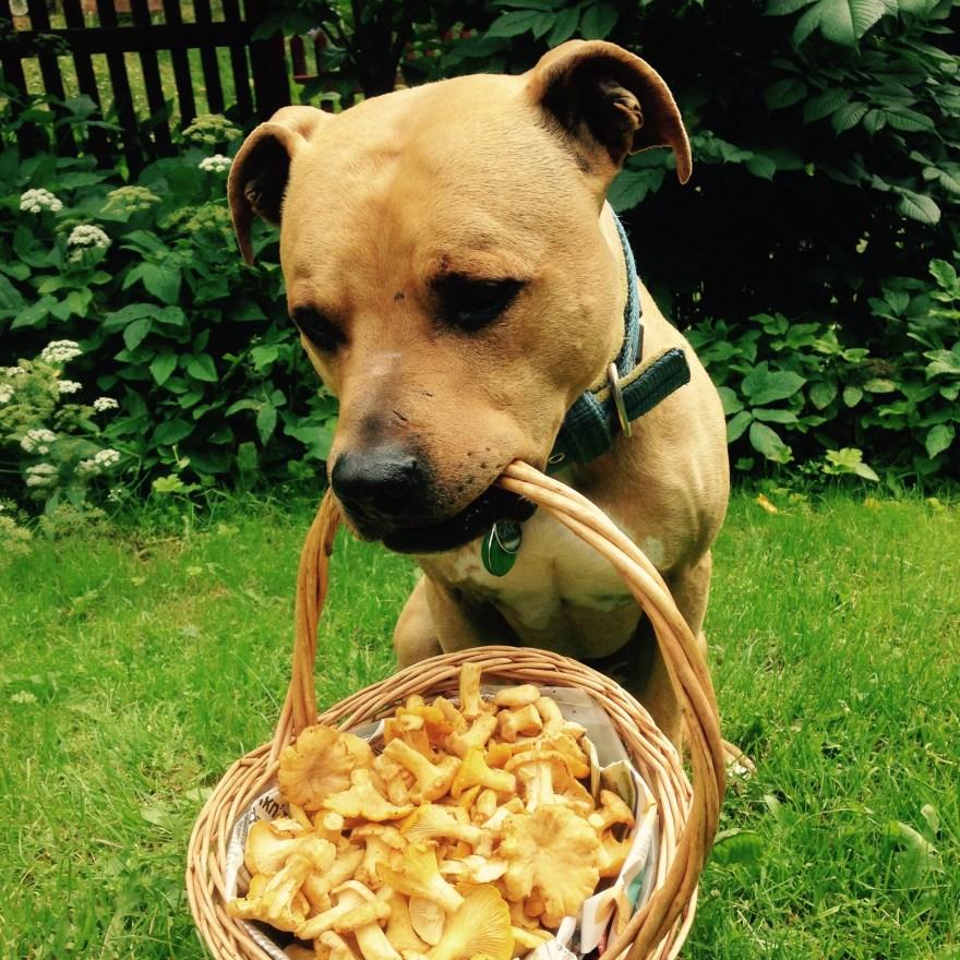 hundutbildning specialsök hundkurs