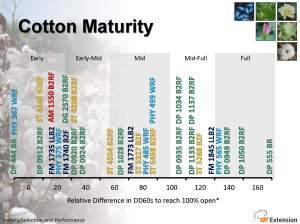 relative maturity of cotton varieties