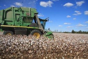 6-row cotton picker