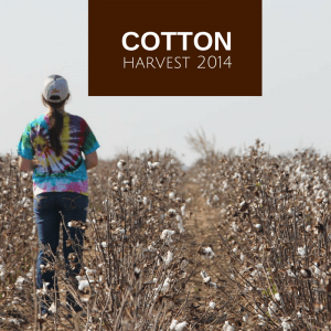 2014 Cotton Harvest
