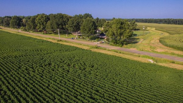 West Tennessee cotton fields