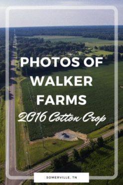 photos of walker farms