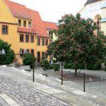 Kunst und Kastanie vor der Schlosskirche in Torgau