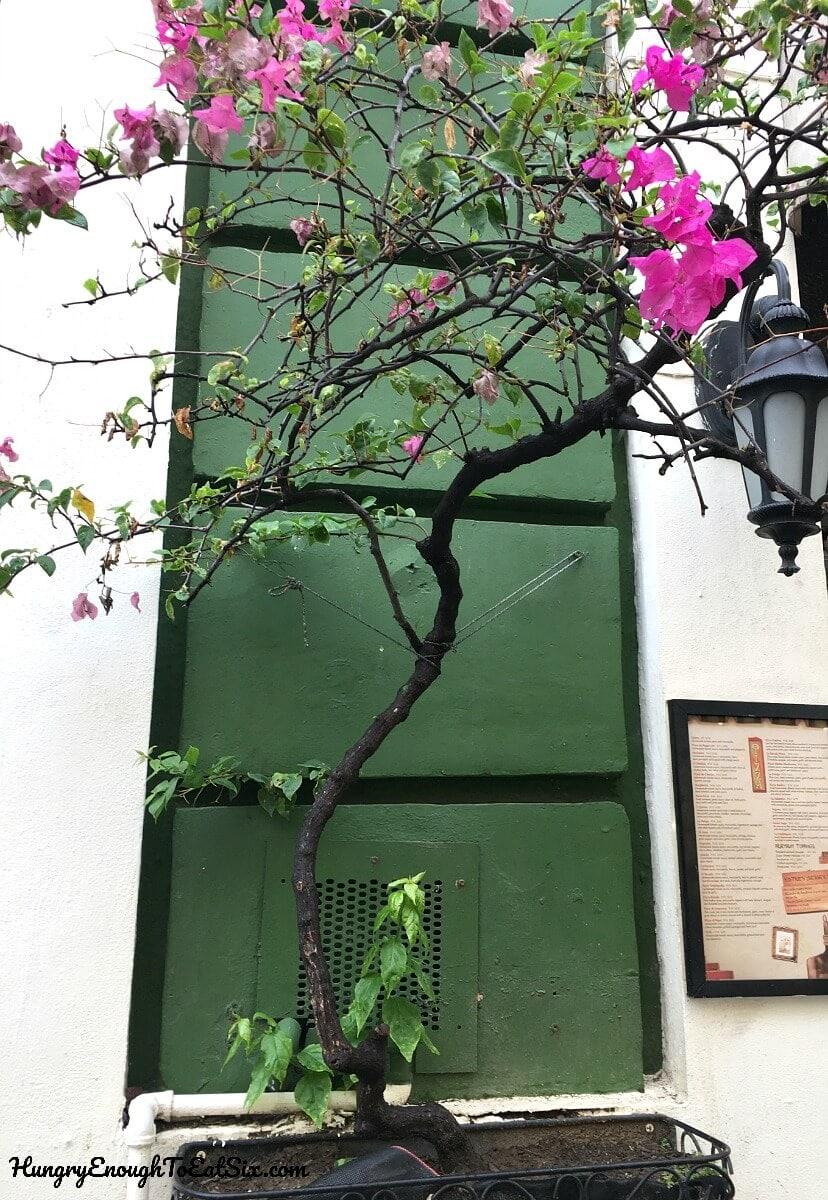 old san juan puerto rico food travel dining