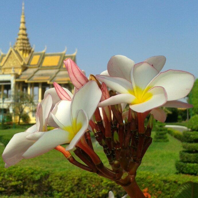 Ein letztes Mal Phnom Penh