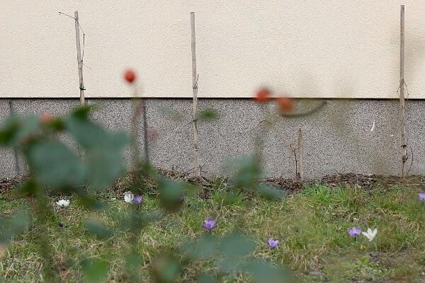 #10 / 52: Frühling!