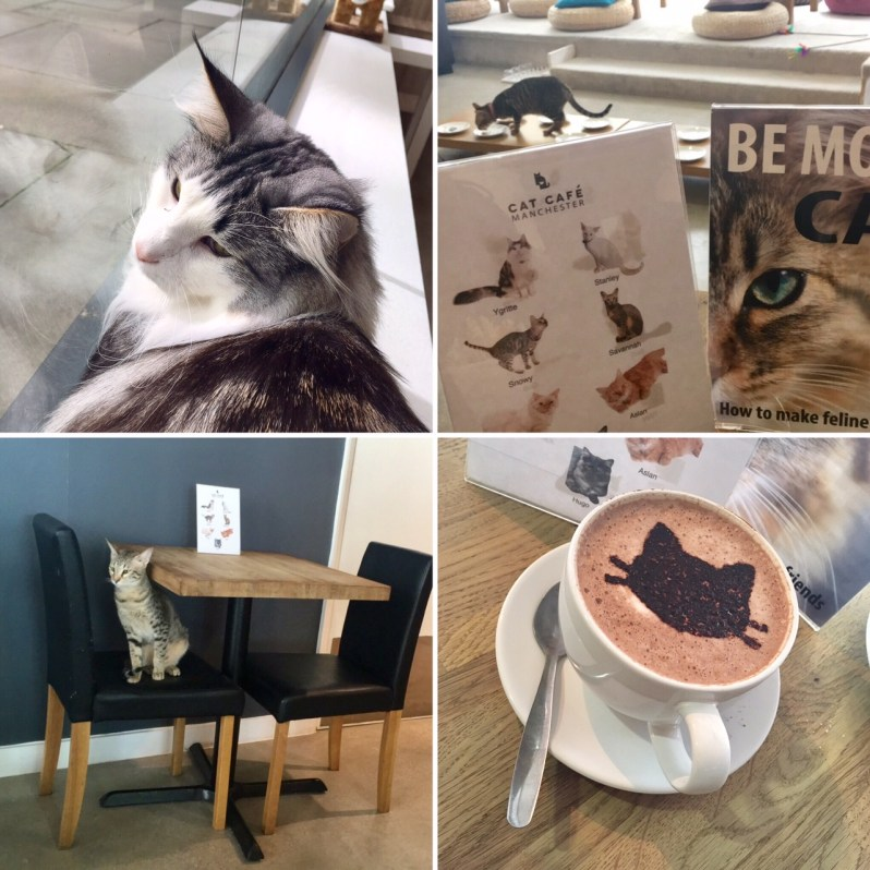 Cat Cafe Manchester