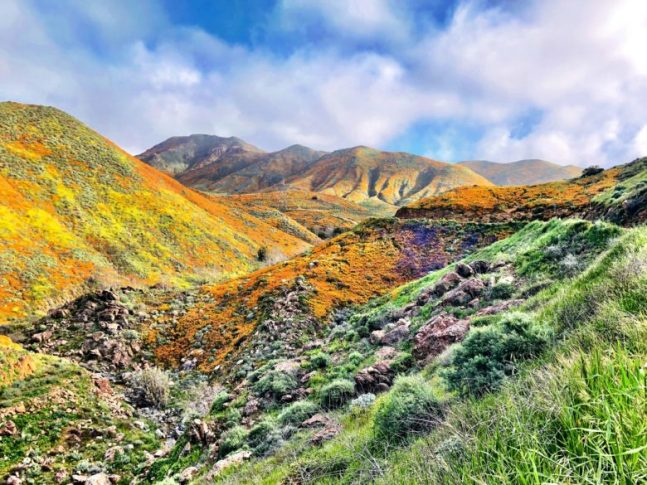 Let's All Enjoy the Super Bloom Like Adults and Leave No Trace by The Hungry Mountaineer