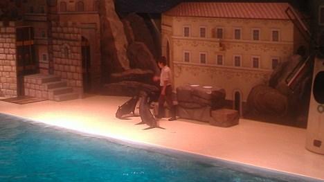 Sea Lion Show!!!