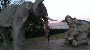 Or just elephants