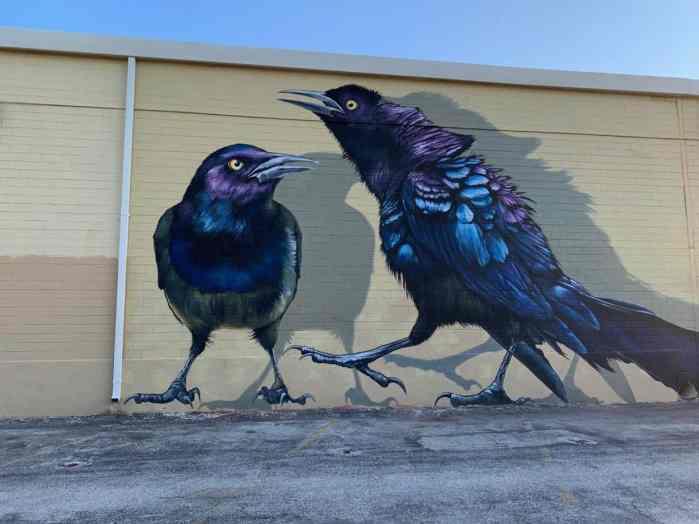 Crow Mural In San Antonio