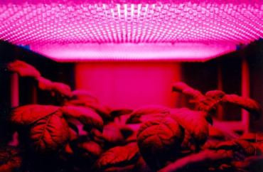Best LED Grow Lights For Indoor Plants