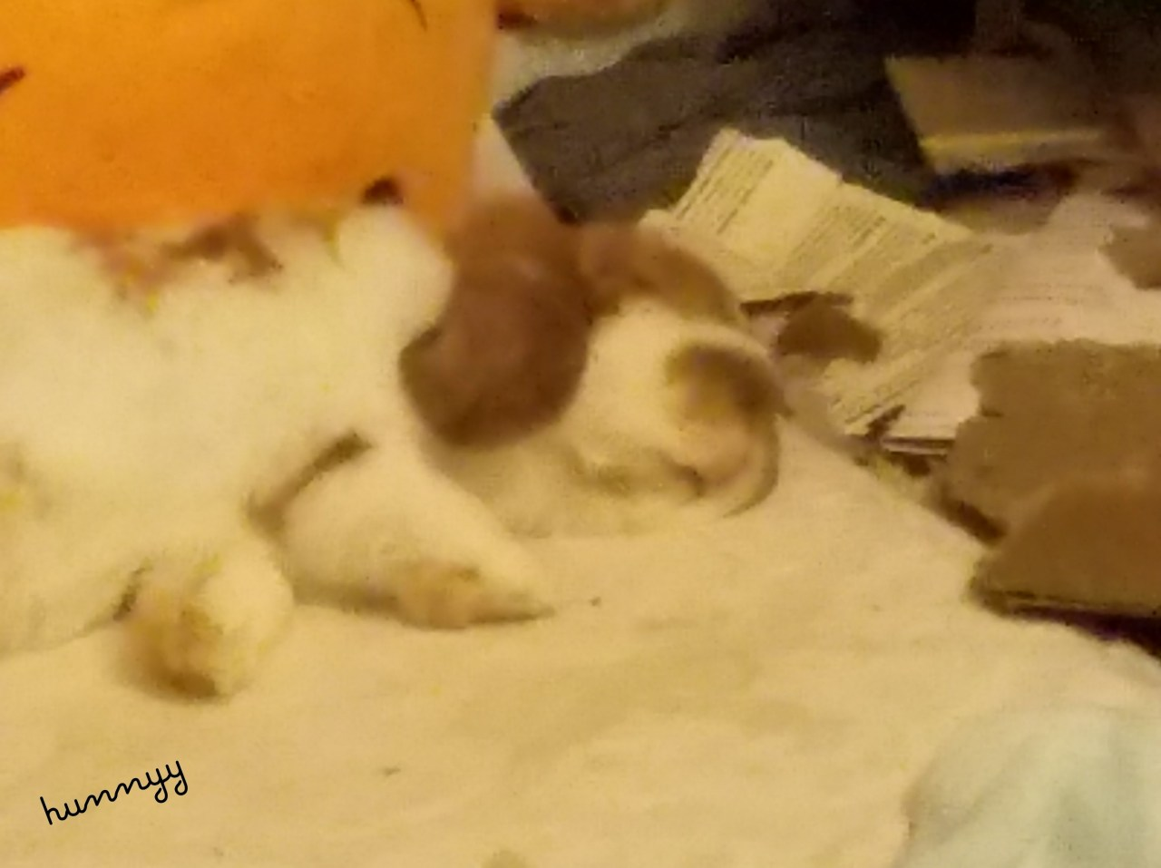 Bunny Update! Bunny Pictures Too Cutee! hunnyy