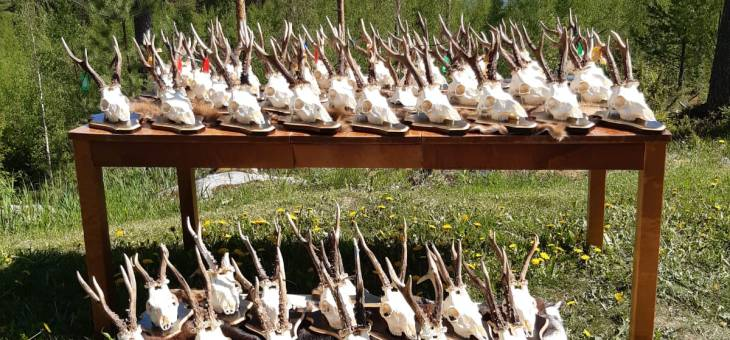 Roebuck hunt in Latvia is open