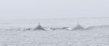 Whales DSC_0865[1]