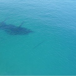 Durisdeer Shipwreck, Stockton Beach, NSW Australia (2021)