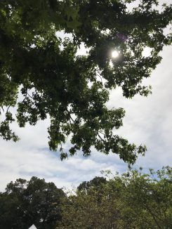 Sun in the trees at Capturing Time Event in Lambton 20 October 2018 (Photo: G Di Gravio)